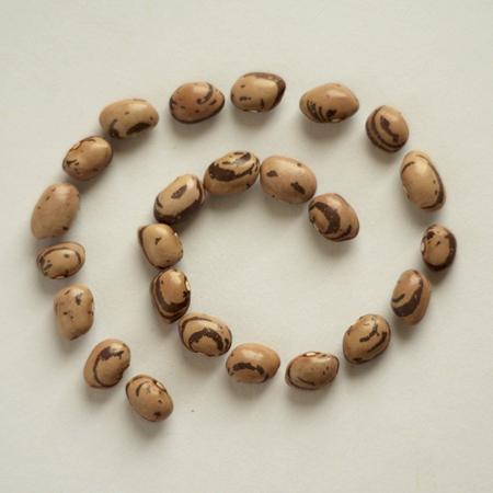 Haricot Kahnawake (Phaseolus vulgaris) | Jardin des vie-la-joie | Artisan semencier