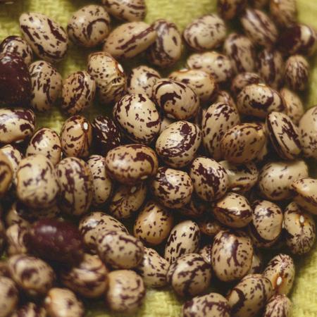 Haricot Romano (Phaseolus vulgaris) | Jardin des vie-la-joie | Artisan semencier