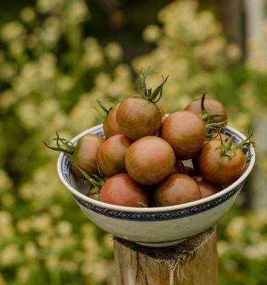 Tomate Black cherry (Lycopersicon esculentum) | Jardin des vie-la-joie | Artisan semencier