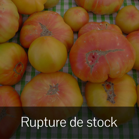 Tomate Striped German (Lycopersicon esculentum)   Jardin des vie-la-joie   Artisan semencier