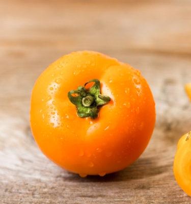 Tomate Yellow scotland (Lycopersicon esculentum) | Le jardin des vie-la-joie| Artisan semencier du Québec