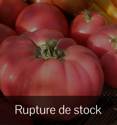 Tomate Brandy Wine (Lycopersicon esculentum) | Jardin des vie-la-joie | Artisan semencier
