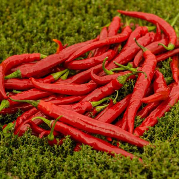 Piment de Cayenne (Capsicum annuum) | Jardin des vie-la-joie | Artisan semencier