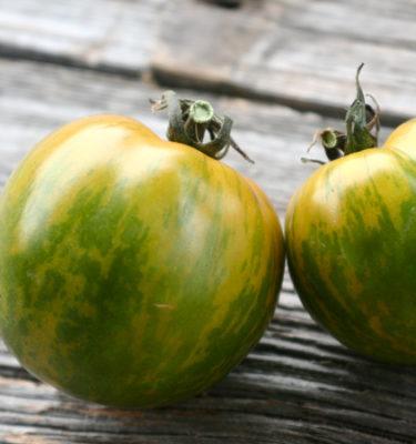 Tomate Green zebra (Lycopersicon esculentum) | Jardin des vie-la-joie | Artisan semencier