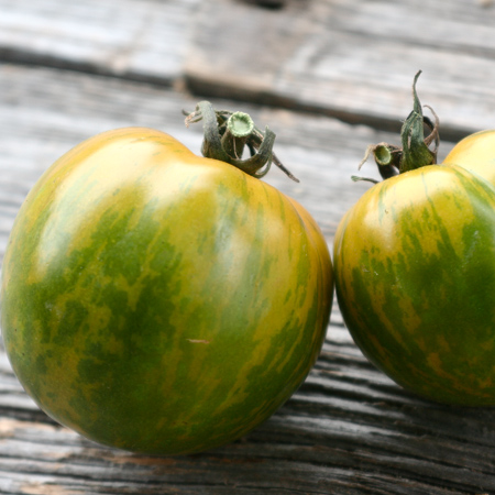 Tomate Green zebra (Lycopersicon esculentum)   Jardin des vie-la-joie   Artisan semencier