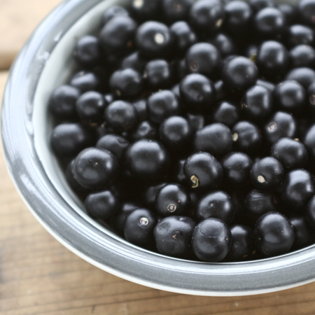 Bleuet de jardin (Solanum melanocerasum) | Jardin des vie-la-joie | Artisan semencier