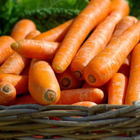 Carotte Nantaise (daucus carota) Jardin des vie-la-joie | Artisan semencier