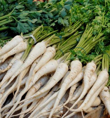 Persil tubéreux (arnica chamissonis) | Jardin des vie-la-joie | Artisan semencier