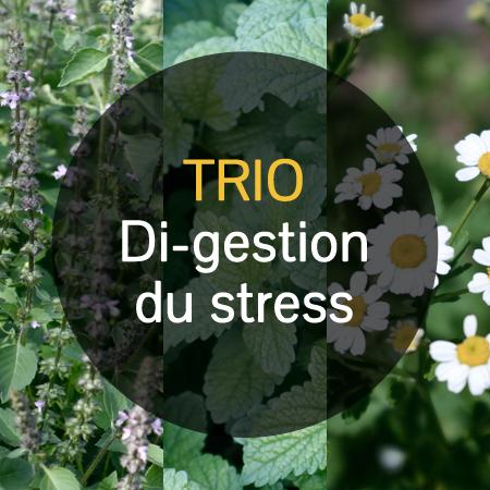 Trio Di-gestion du stress [(basilic sacré 'Rama' (Ocimum sanctum), mélisse (Melissa officinalis), grande camomille (Tanacetum parthenium)] | Jardin des vie-la-joie | Artisan semencier