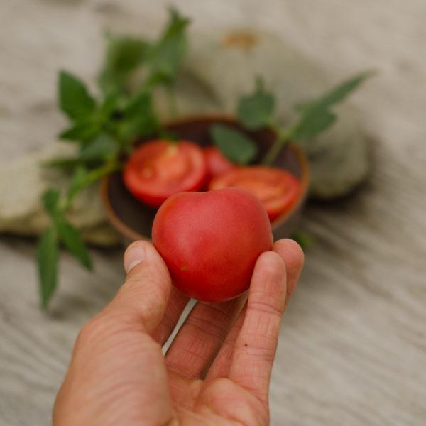 Tomate Pêche rose (Lycopersicon esculentum) | Jardin des vie-la-joie | Artisan semencier