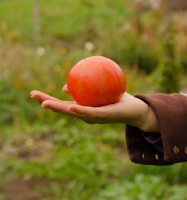 Tomate Boney M (Lycopersicon esculentum) | Le jardin des vie-la-joie| Artisan semencier du Québec