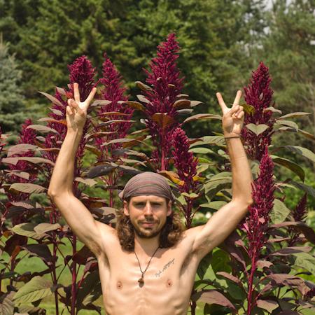 Amaranthe Opopeo (Amaranthus cruentus) | Jardin des vie-la-joie | Artisan semencier