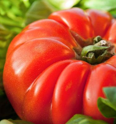 Tomate Marmande (Lycopersicon esculentum) | Le jardin des vie-la-joie| Artisan semencier du Québec