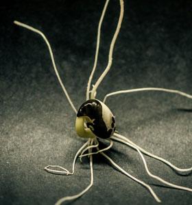 Tests de germination   Le jardin des vie-la-joie   Artisan semencier du Québec
