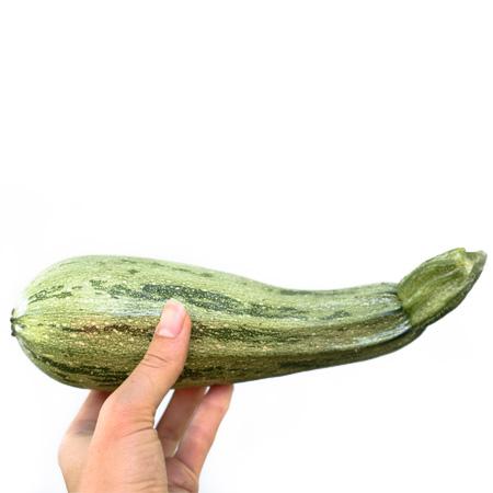 Courgette Zucchini Caserta (Cucurbita pepo) | Jardin des vie-la-joie