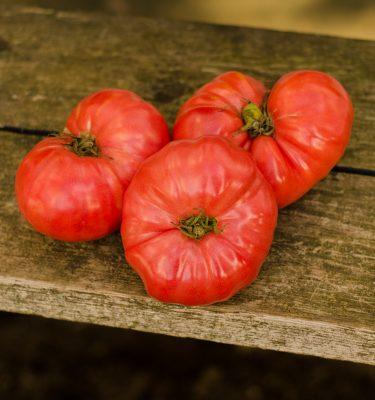 Semences de tomate Savignac Dufresne(Lycopersicon esculentum) | Le jardin des vie-la-joie| Artisan semencier du Québec