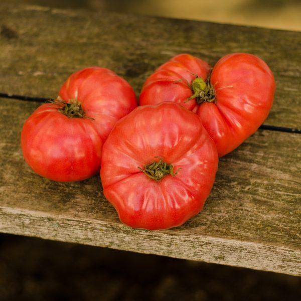 Semences de tomate Savignac Dufresne(Lycopersicon esculentum)   Le jardin des vie-la-joie  Artisan semencier du Québec