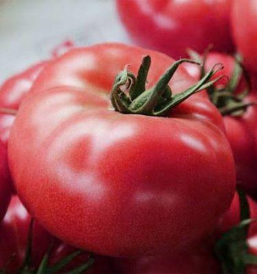 Tomate Savignac (Lycopersicon esculentum) | Le jardin des vie-la-joie| Artisan semencier du Québec