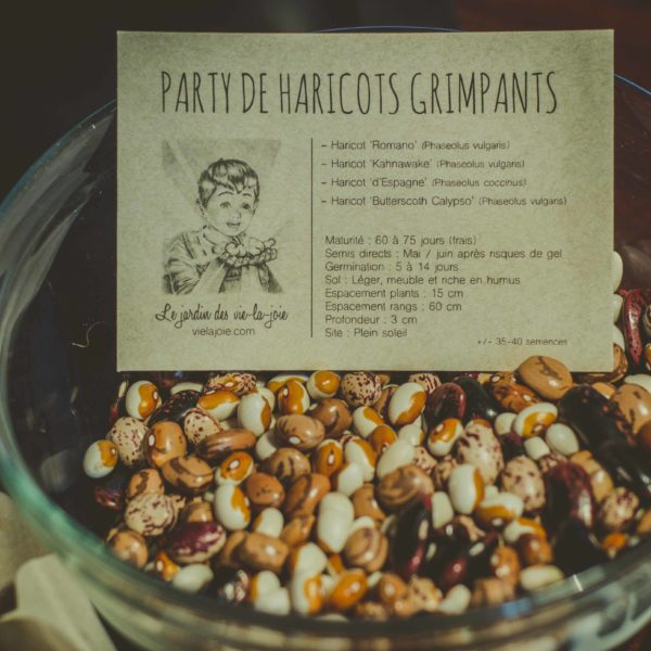 Party de haricots grimpants | Le jardin des vie-la-joie| Artisan semencier du Québec