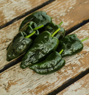 Piment Ancho Poblano (Capsicum annuum) | Jardin des vie-la-joie | Artisan semencier