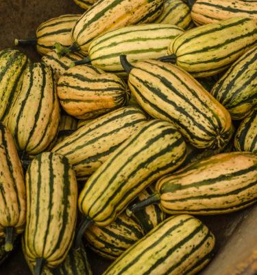 Courge d'hiver Honey Boat delicata (cucurbita pepo) | Le jardin des vie-la-joie| Artisan semencier du Québec