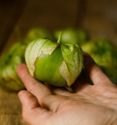 Tomatillo 'Verde' (Physalis philadelphica) | Le jardin des vie-la-joie | Artisan semencier du Québec