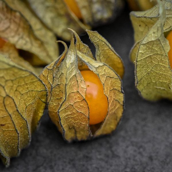 Coqueret du Pérou (Physalis peruviana) | Le jardin des vie-la-joie| Artisan semencier du Québec