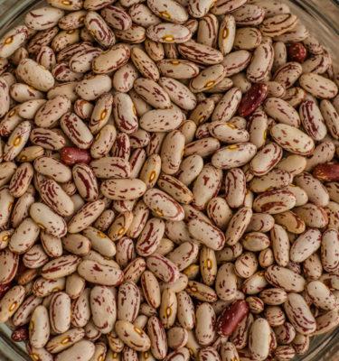 Haricot nain 'Famille Boucher' (Phaseolus vulgaris)   Jardin des vie-la-joie   Artisan semencier