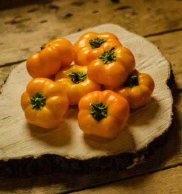 Poivron doux 'Doe Hill' (Capsicum annuum) | Jardin des vie-la-joie | Artisan semencier