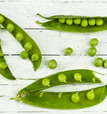 Semences de pois à écosser Green Arrow (Pisum sativum) | Jardin des vie-la-joie | Artisan semencier