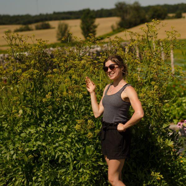 Graines de livèche / Céleri perpétuel | Jardin des vie-la-joie | Artisan semencier