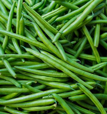 Semences de haricot nain Provider (Phaseolus vulgaris) | Jardin des vie-la-joie | Artisan semencier