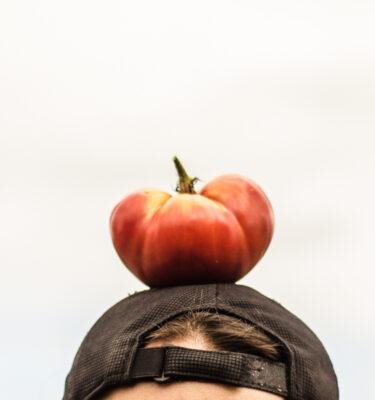Tomate Adelin Morin (Lycopersicon esculentum) | Jardin des vie-la-joie | Artisan semencier
