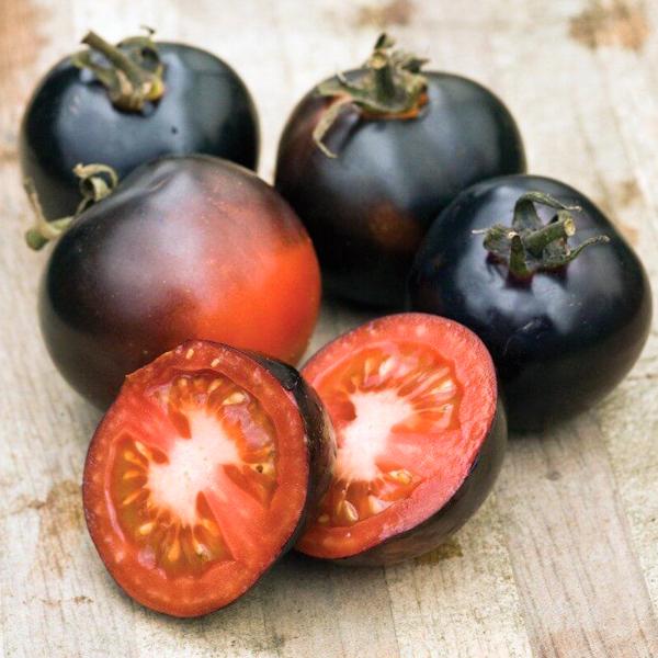 Semences de tomate Indigo Rose (Lycopersicon esculentum) | Jardin des vie-la-joie | Artisan semencier