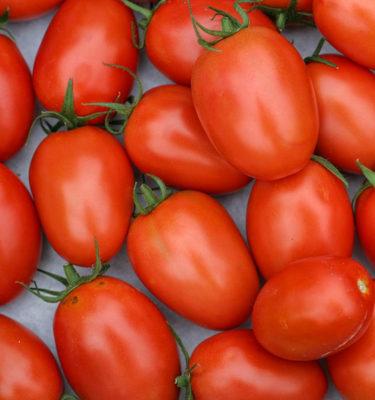 Semences de tomate italienne Roma VF (Lycopersicon esculentum) | Jardin des vie-la-joie | Artisan semencier