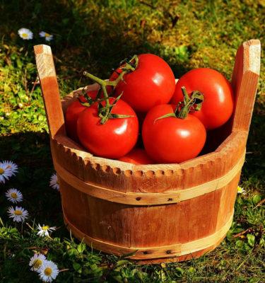 Semences de tomate Boney M (Lycopersicon esculentum) | Jardin des vie-la-joie | Artisan semencier