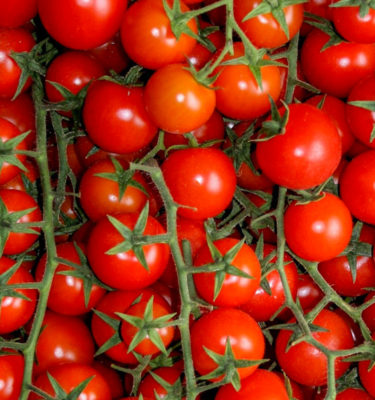 Semences de tomate cerise Chadwick (Lycopersicon esculentum) | Jardin des vie-la-joie | Artisan semencier