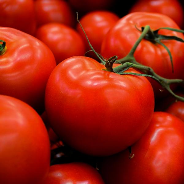 Semences de tomate Manitoba (Lycopersicon esculentum) | Jardin des vie-la-joie | Artisan semencier