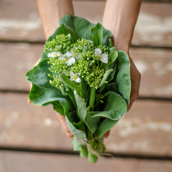 Brocoli chinois flowering (Brassica oleracea) | Jardin des vie-la-joie | Artisan semencier