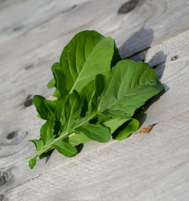 Roquette de jardin (Eruca sativa) | Jardin des vie-la-joie | Artisan semencier
