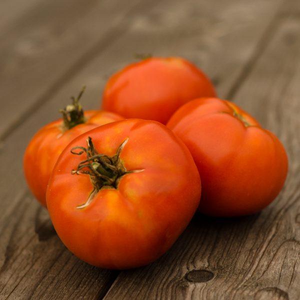 Tomate All Gills Purpose (Lycopersicon esculentum) | Le jardin des vie-la-joie| Artisan semencier du Québec