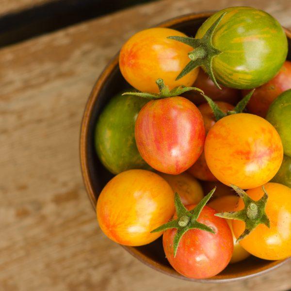 Semences de tomate Bumble Bee (Lycopersicon esculentum) | Jardin des vie-la-joie | Artisan semencier