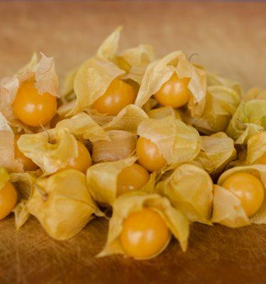 Cerise de terre Hardwick (Physalis pruinosa) | Jardin des vie-la-joie | Artisan semencier