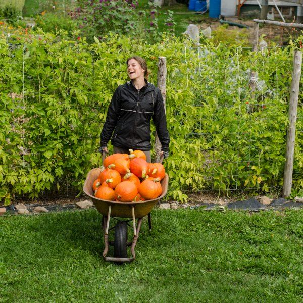 Semences de courge Red Kuri (Cucurbita maxima) | Jardin des vie-la-joie | Artisan semencier