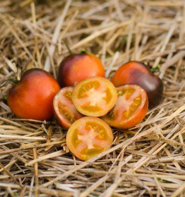 Semences de tomate Cascade Village Blue (Lycopersicon esculentum) | Jardin des vie-la-joie | Artisan semencier