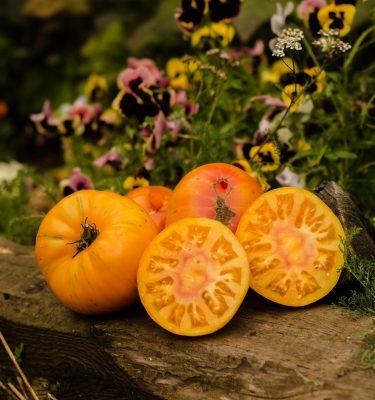 Semences de tomate Dwarf Confetti (Lycopersicon esculentum) | Jardin des vie-la-joie | Artisan semencier