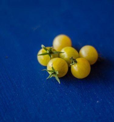 Semences de tomate coyote / mini blanche (Lycopersicon esculentum) | Jardin des vie-la-joie | Artisan semencier