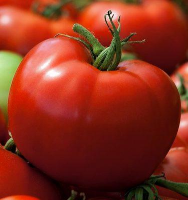 Semences de tomate Grosse rouge unanime (Lycopersicon esculentum) | Jardin des vie-la-joie | Artisan semencier