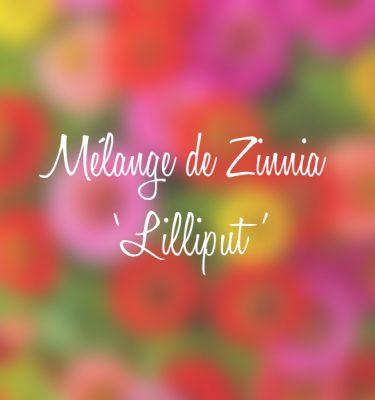 Mélange de zinnia 'Lilliput' (Zinnia elegans)   Jardin des vie-la-joie   Artisan semencier